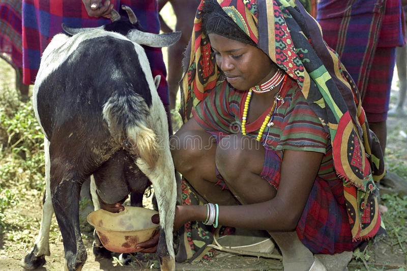 Download Afar Teen Milking Goat In Traditional Colorful Dress Editorial Image - Image of clothing, bracelets: 64017320
