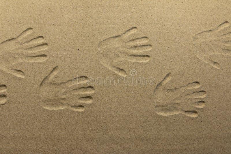 Afdruk van vele menselijke handen op het zand, als achtergrond, texturen stock afbeeldingen