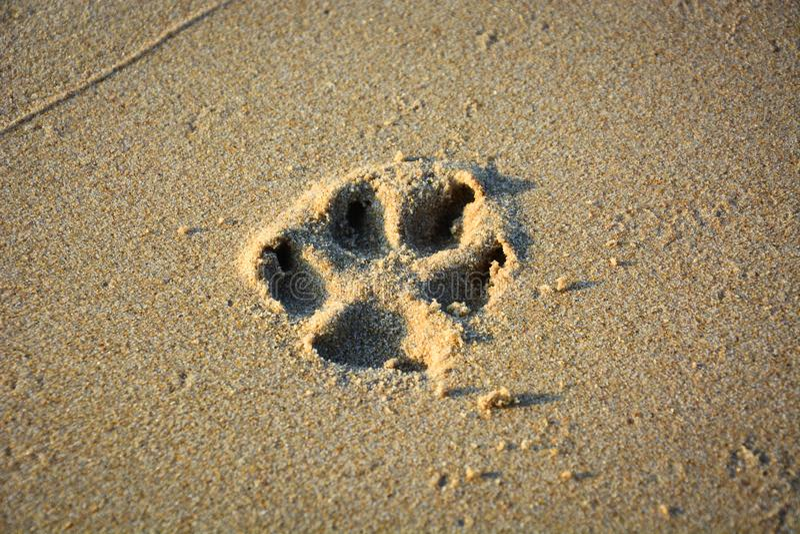 Afdrukken van hondenpoten op strandzand sluiten stock afbeeldingen