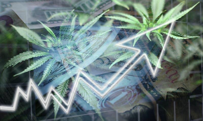 Aff?r & finans av den h?gkvalitativa marijuanabranschen fotografering för bildbyråer