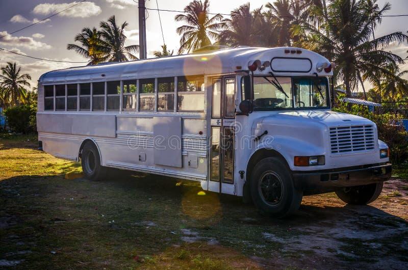 Affärsföretagbuss i tropisk trädgård arkivfoto