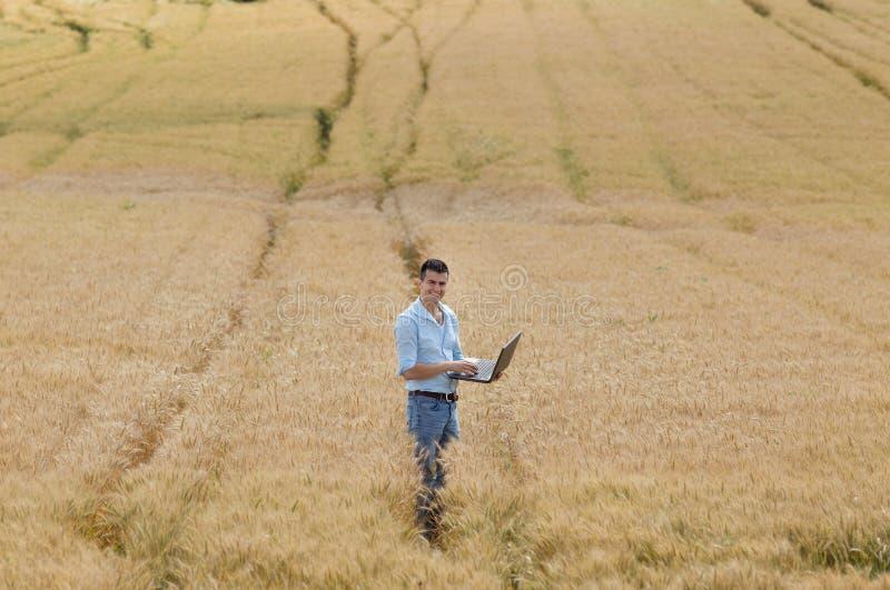 Affärsman i fältet arkivbild