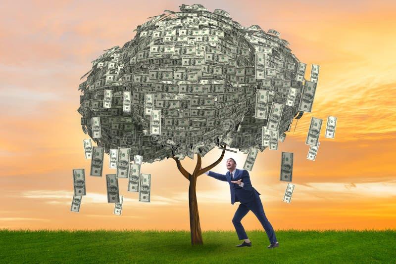 Affärsman med pengarträdet i affärsidé arkivfoto