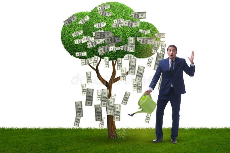 Affärsman som bevattnar pengarträdet i investeringbegrepp arkivfoto