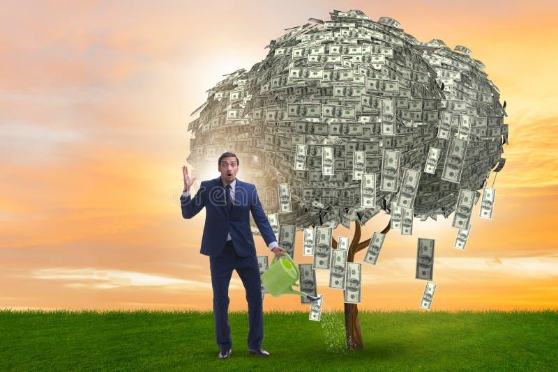 Affärsman som bevattnar pengarträdet i investeringbegrepp royaltyfri bild