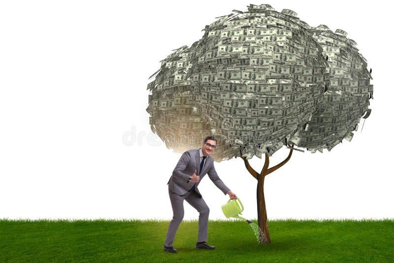 Affärsman som bevattnar pengarträdet i investeringbegrepp royaltyfria bilder