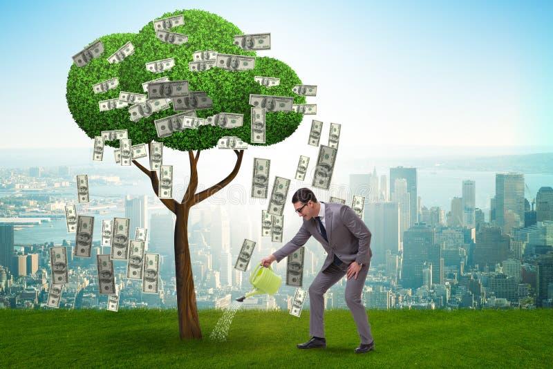 Affärsman som bevattnar pengarträdet i investeringbegrepp royaltyfri foto