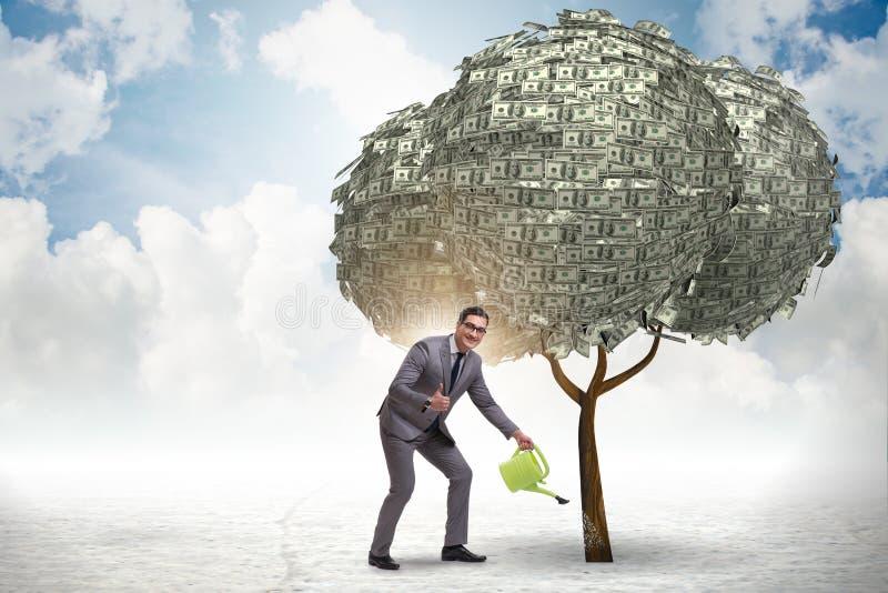 Affärsman som bevattnar pengarträdet i investeringbegrepp arkivfoton