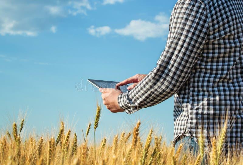Affärsmannen är på ett fält av moget vete och rymmer en minnestavladator royaltyfri bild