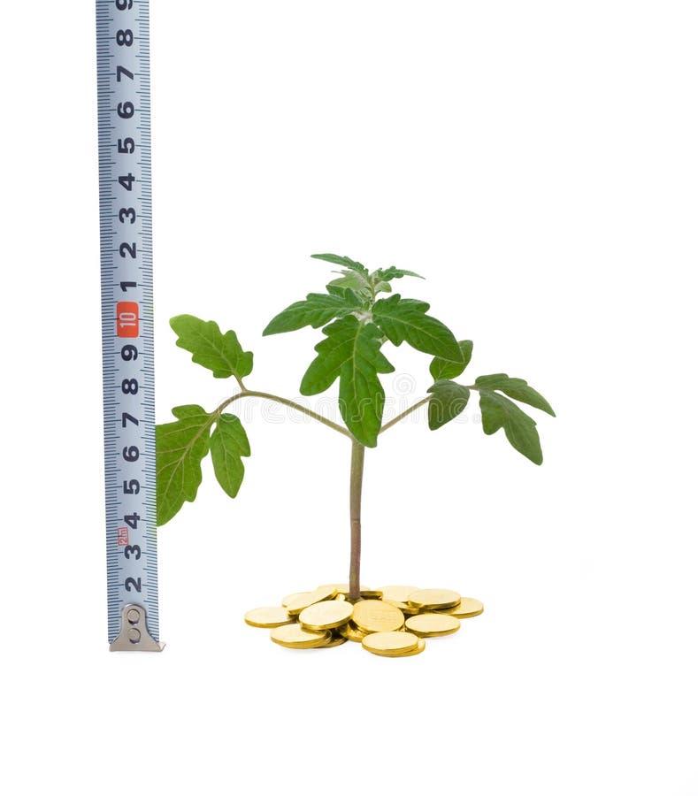 affärstillväxtmätning arkivfoto