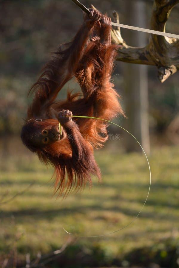 Affaires de singe photos libres de droits