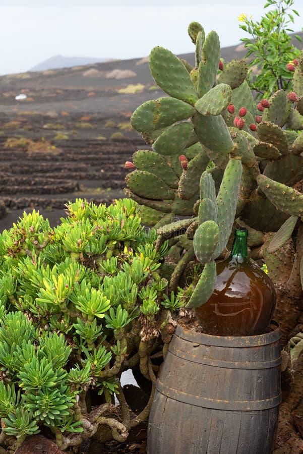 Affaires de vinification à Lanzarote, baril avec une bouteille de vin du pays, vignobles à l'arrière-plan images stock