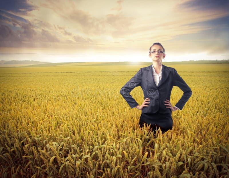 Affaires pour l'agriculture photo libre de droits