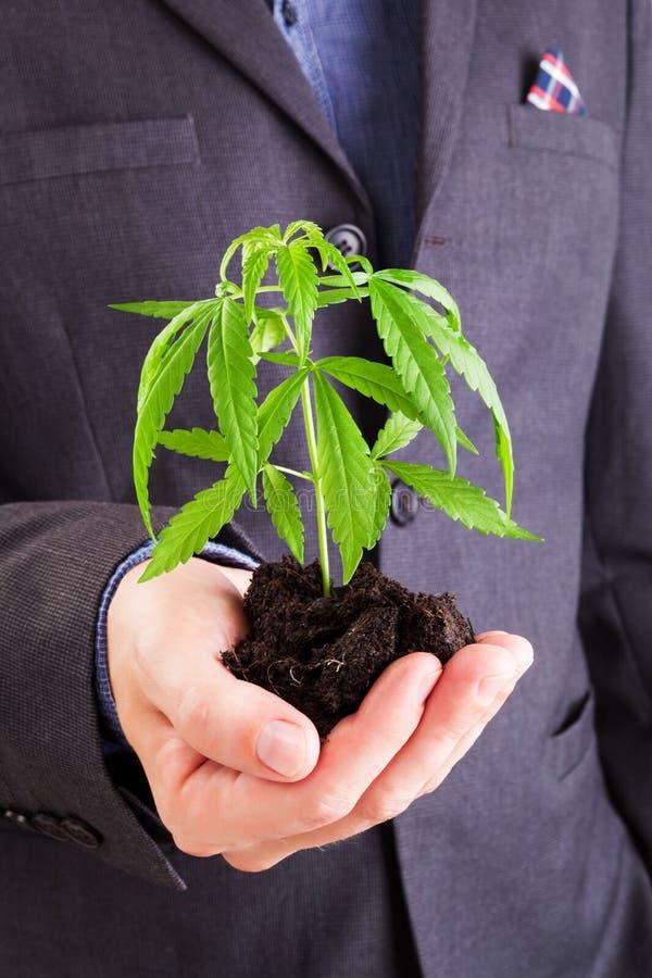 Affare della cannabis fotografia stock