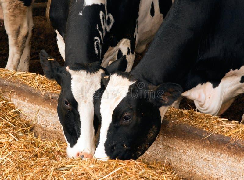Affare di agricoltura fotografia stock
