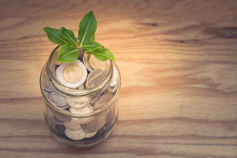 Affare e concetto finanziario: L'albero verde dello sprount che cresce attraverso i soldi conia in barattolo di vetro dei soldi d fotografie stock libere da diritti