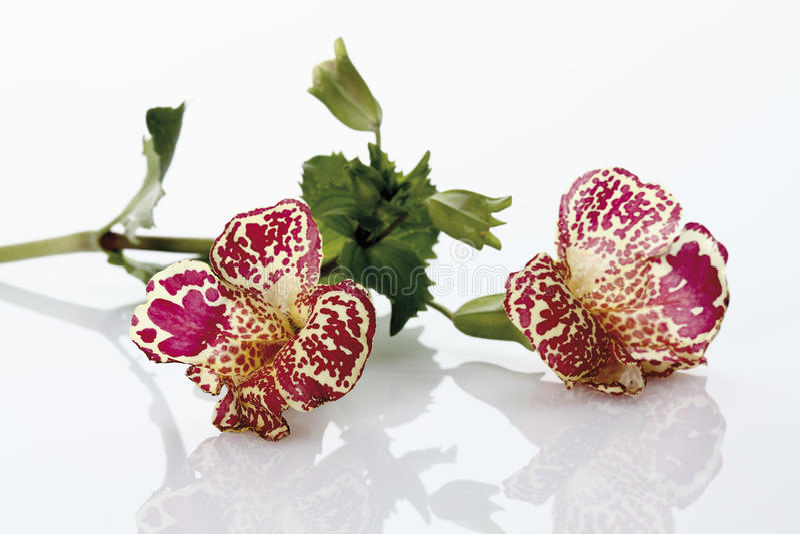Affe-Blumen stockbilder