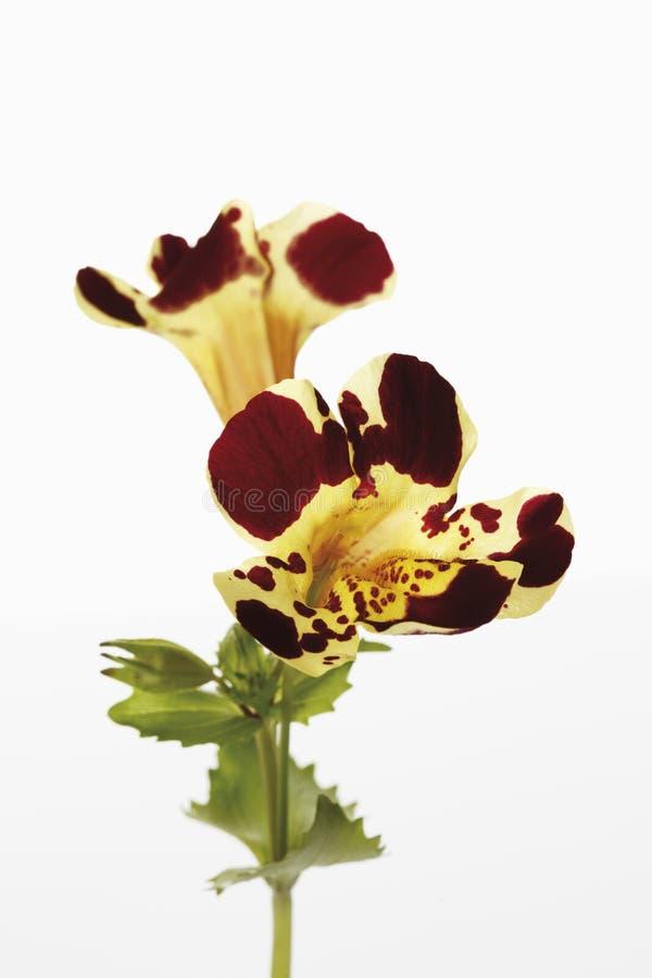 Affe-Blumen lizenzfreies stockbild