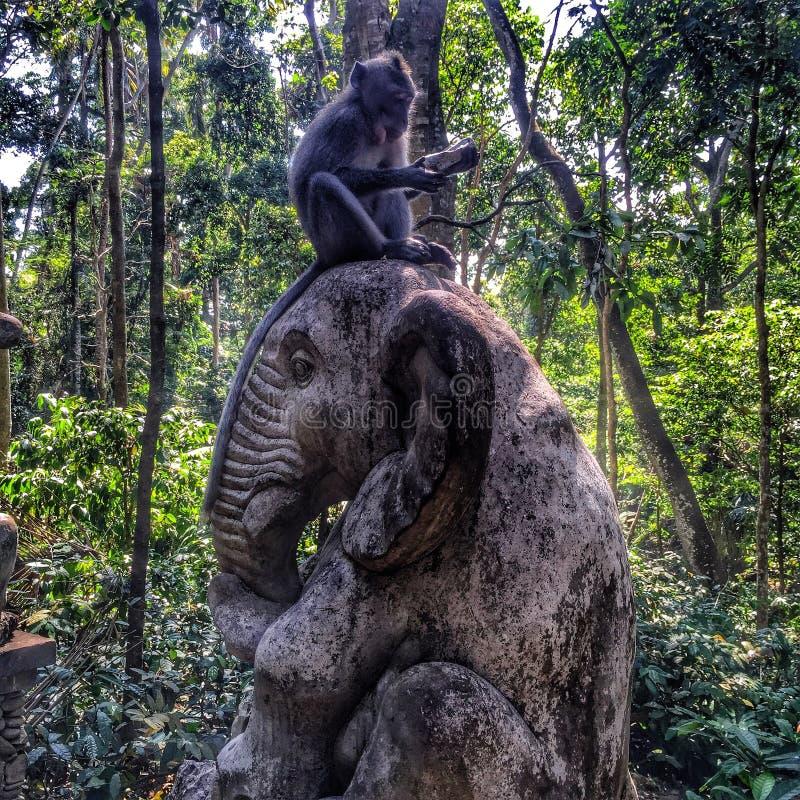Affe, der auf Elefanten sitzt stockfotografie