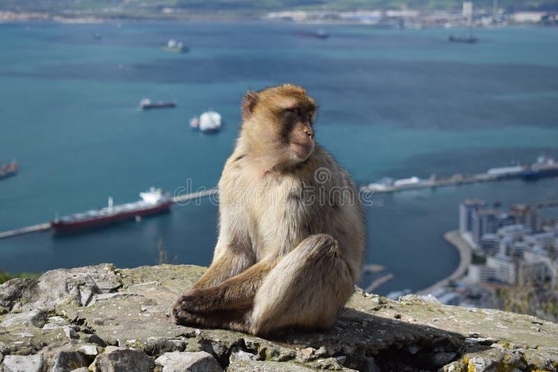 Affe mit einer Ansicht stockfoto