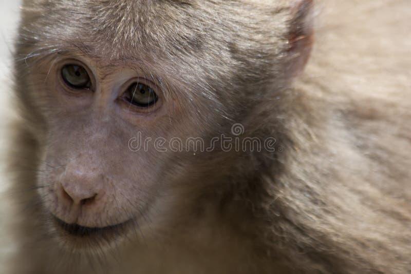 Affe-Porträt lizenzfreie stockbilder
