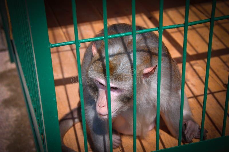 Affe sitzen in einem Käfig stockbild