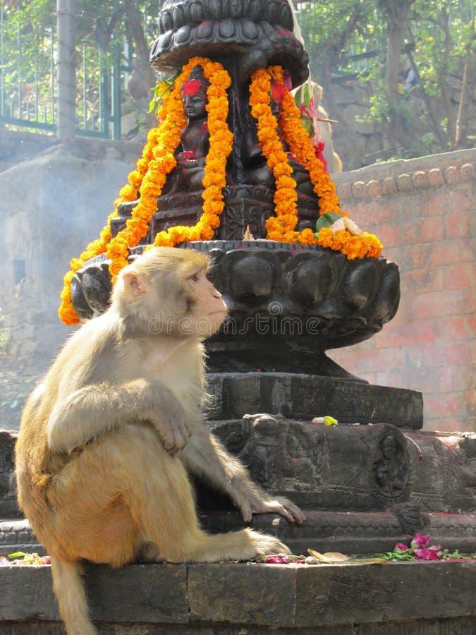 Affe-Tempel Nepal stockfotografie