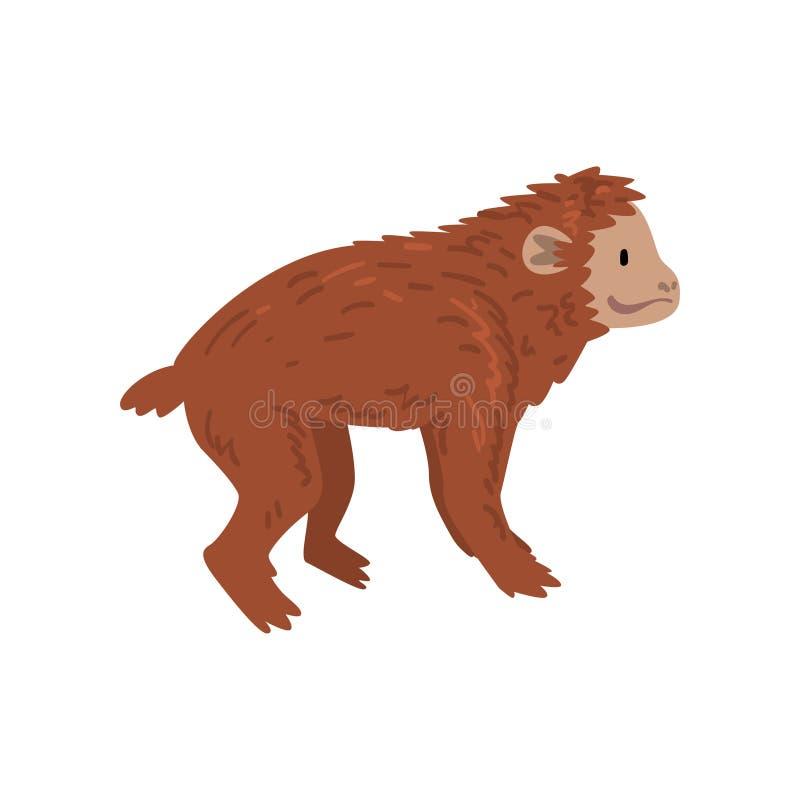 Affe, Affe-Tierfortschritt, Evolutionsprozess der Frauen-Vektor-Illustration vektor abbildung