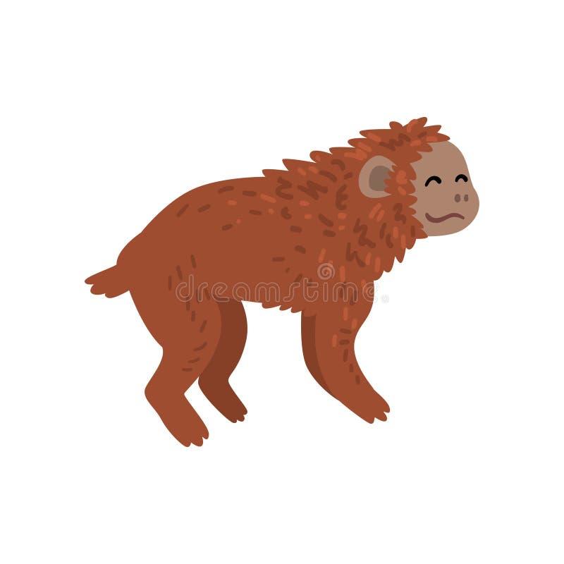 Affe, Affe-Tierfortschritts-Stadium, Evolutionsprozess der Frauen-Vektor-Illustration stock abbildung