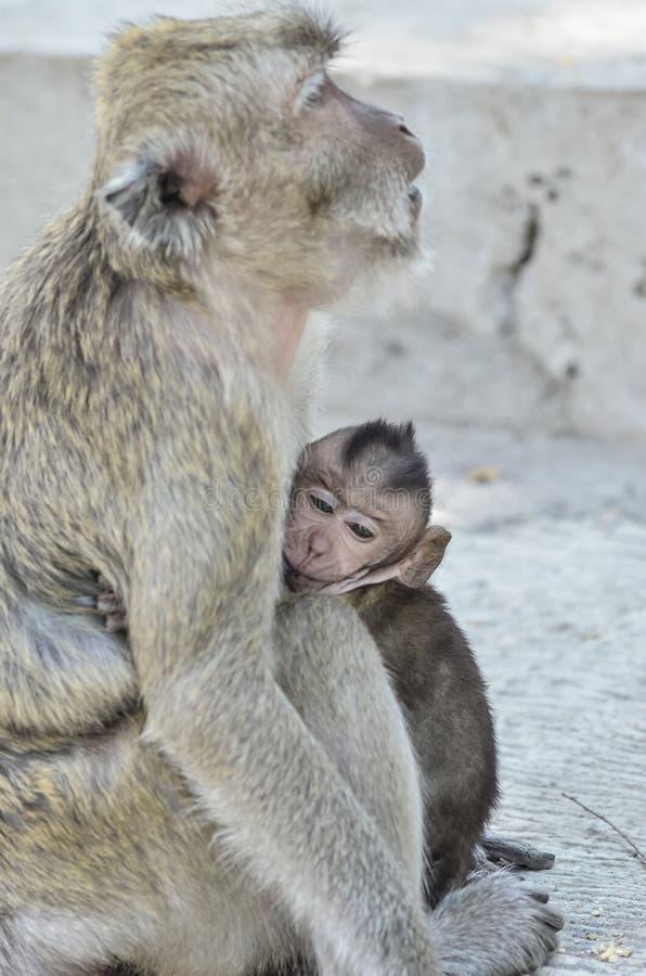 Affe und sein Leben stockbilder