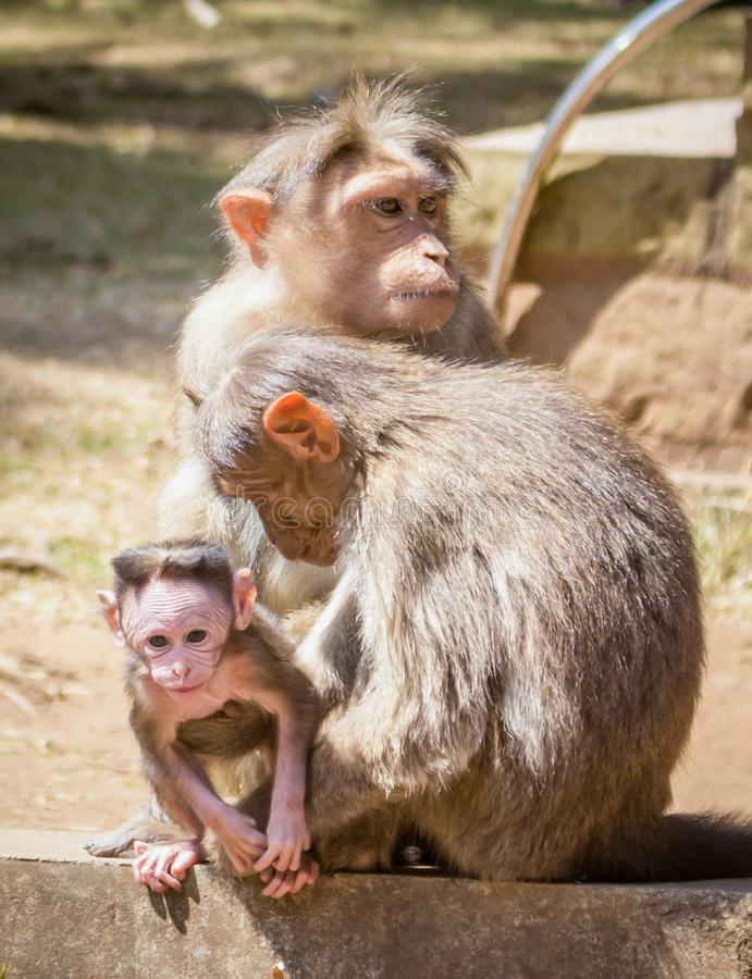 Affe und seine Familie stockfoto