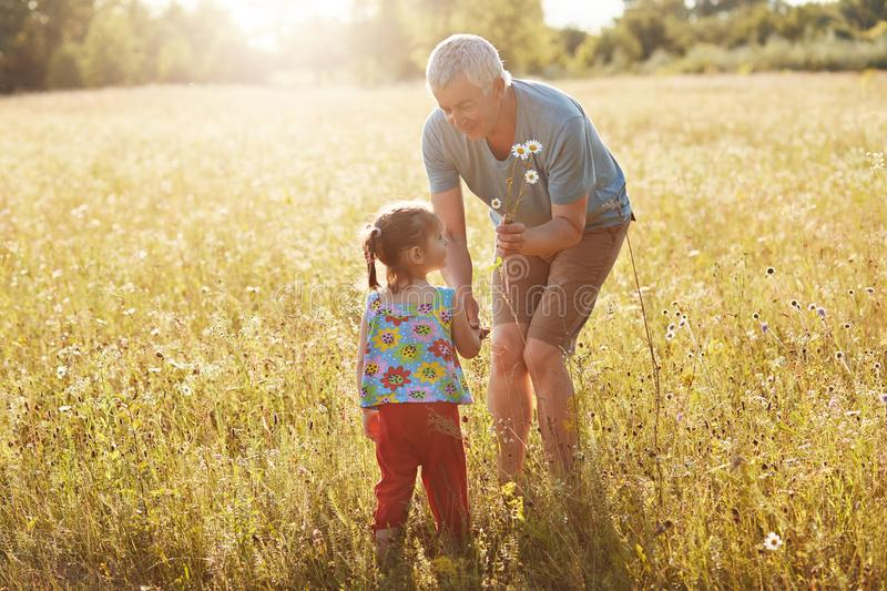Affectionate grandfather spends free time with his small granddaughter, stroll together on green field, pick up camomiles, have go stock photo