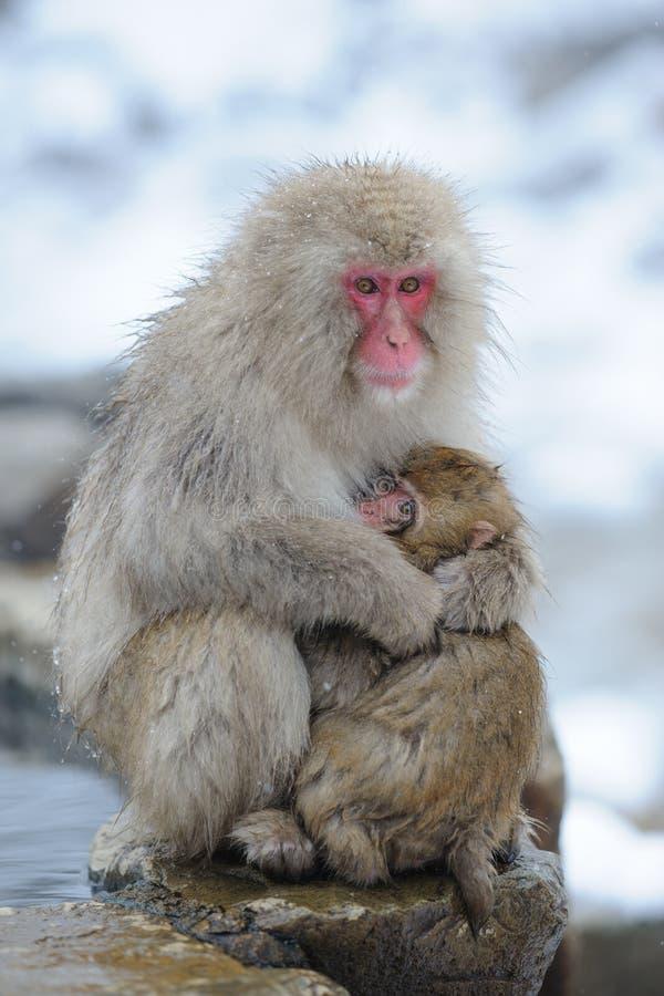 Affemutter umarmen ihren Sohn lizenzfreie stockfotos