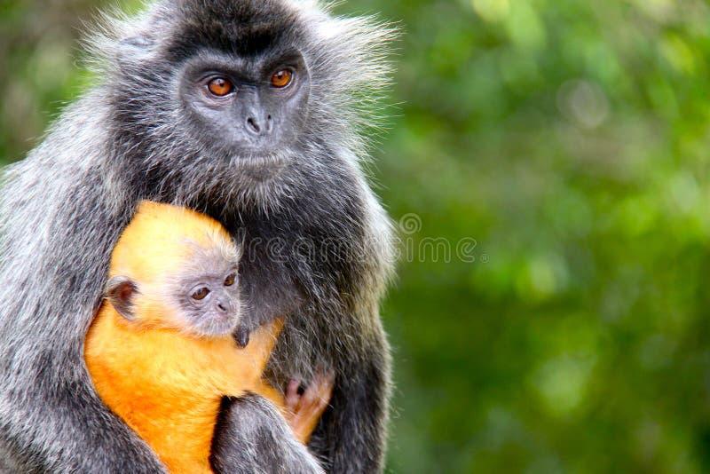 Affemutter und -baby lizenzfreie stockfotos