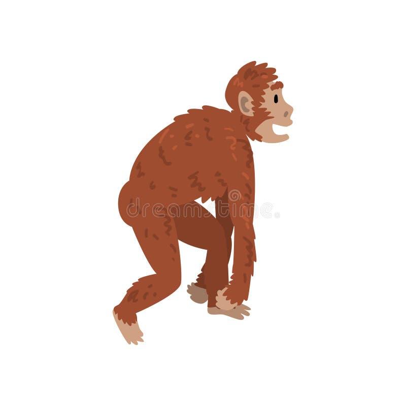 Affen-Affe, Driopitek, Biologie-menschliche Entwicklungs-Stadium, Evolutionsprozess der Frauen-Vektor-Illustration lizenzfreie abbildung
