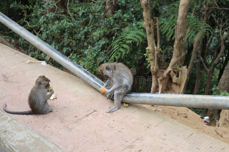 Affen essen lizenzfreie stockbilder