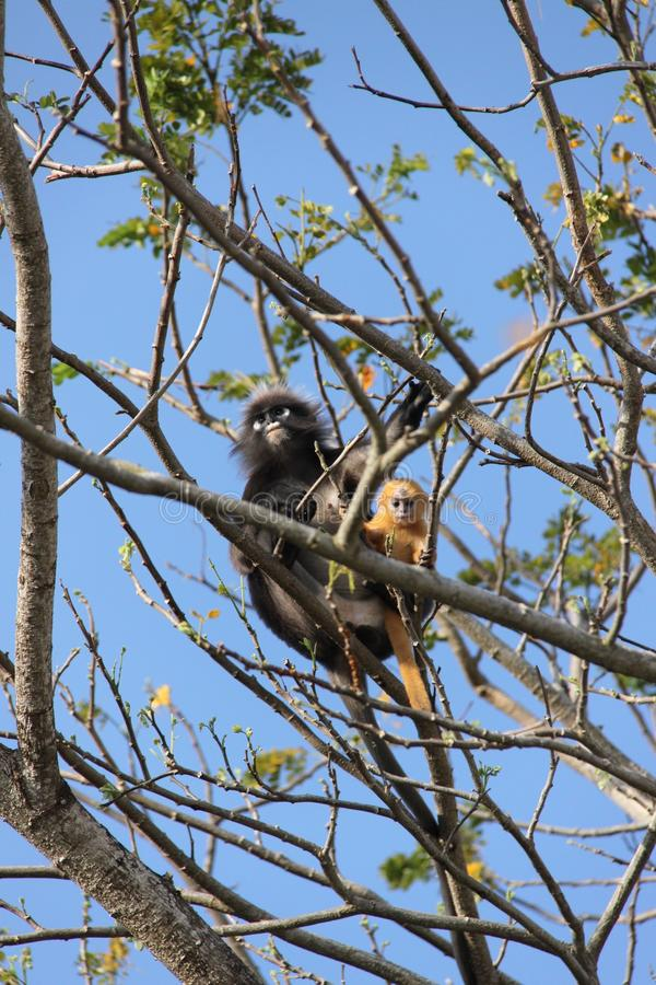 Affen im Baum lizenzfreies stockbild