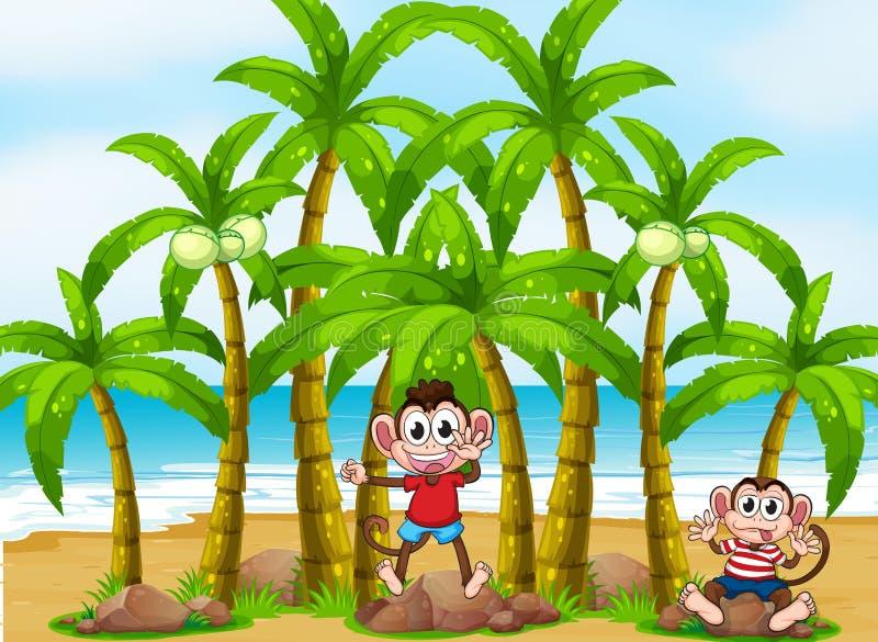 Affen am Strand mit Kokosnussbäumen stock abbildung