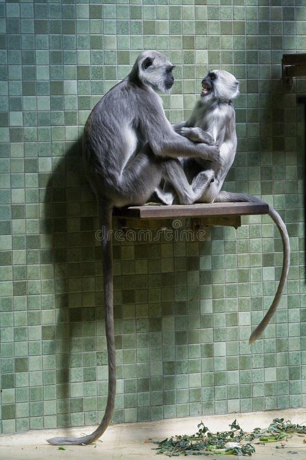 Affen und Fallhammer stockfotografie