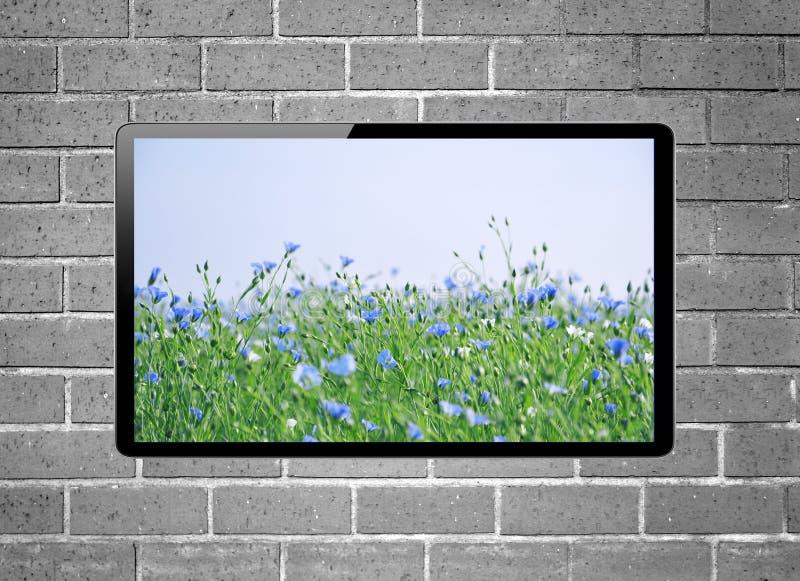 Affichage à cristaux liquides TV avec le pré de fleur sur l'écran accrochant sur le mur de briques image libre de droits