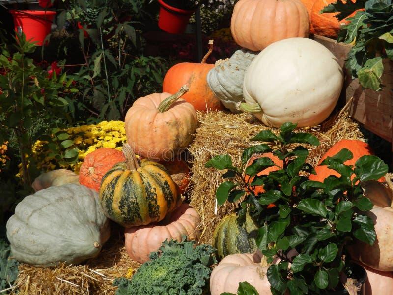 Affichage d'Autumn Pumpkins et de courge photo stock