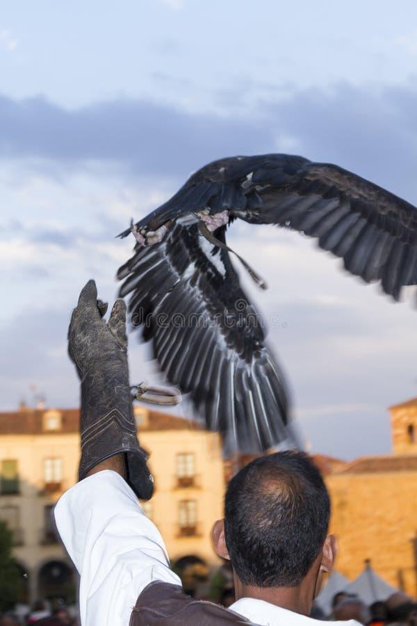 Affichage de fauconnerie sur un marché médiéval de  vila de à images stock
