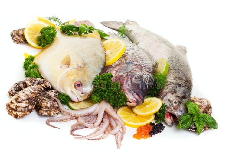 Affichage de fruits de mer crus photo stock