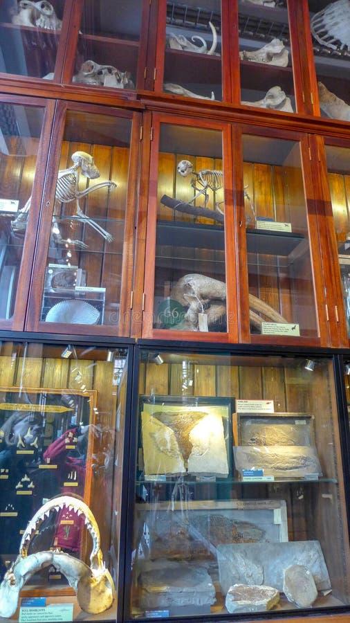 Affichage des insectes et de la vie micro sur la visionneuse au n?on dans Grant Museum de la zoologie Londres photo stock