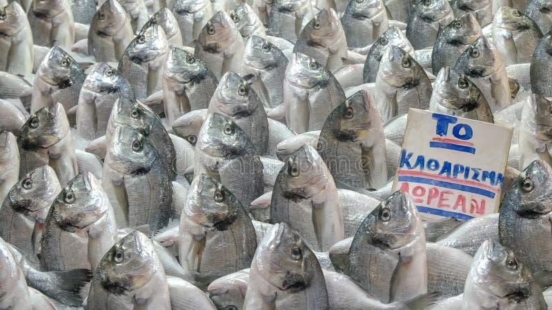 Affichage peu commun du poisson frais au marché central d'Athènes image libre de droits