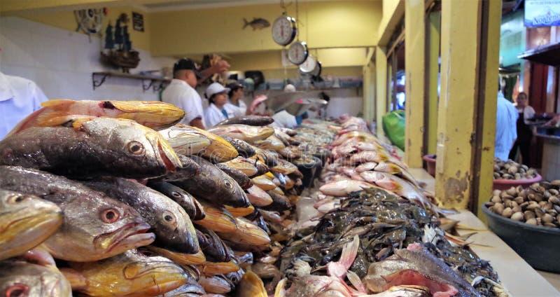 Affichage traditionnel de marché de fruits de mer à Tegucigalpa Honduras photographie stock