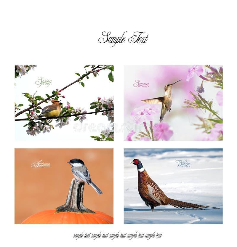Affiche avec des oiseaux dans toutes les saisons. image stock