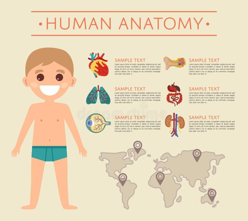 Affiche d'anatomie de corps humain avec l'enfant de sourire illustration stock