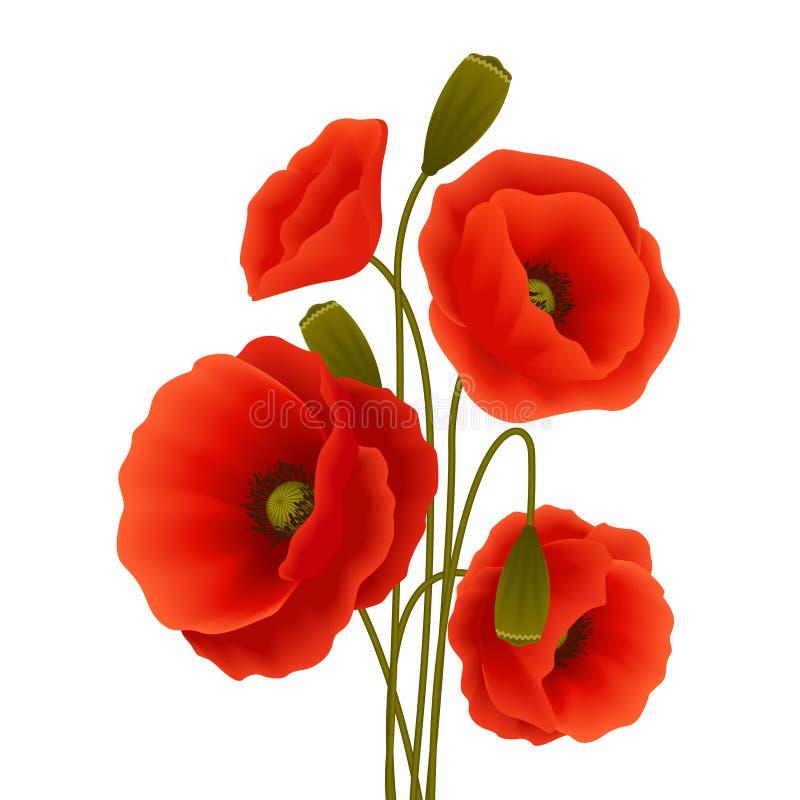 Affiche de fleur de pavot illustration de vecteur