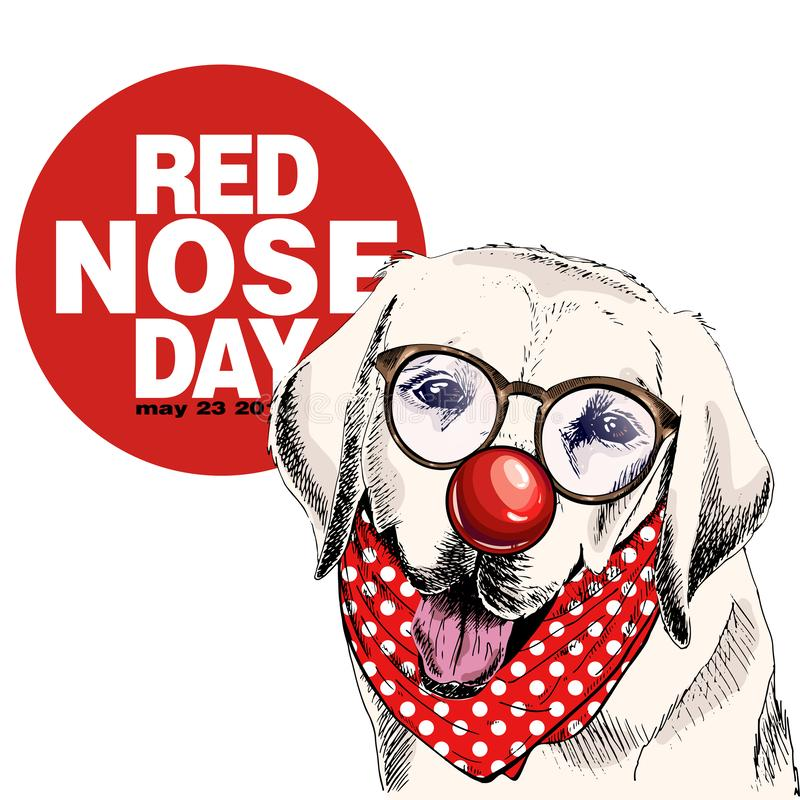 Affiche rouge de jour de nez Portrait tir? par la main de chien de vecteur Verres de Labrador, nez de clown et bandana de port re illustration stock